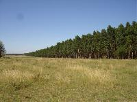 Natural grassland to afforestation